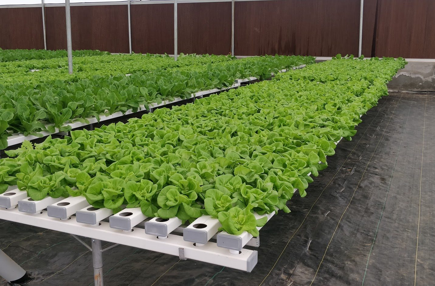 Commercial Hydroponics Farm India