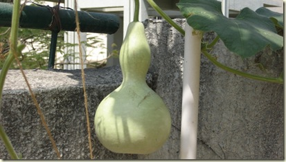 Gourd Pictures 004-mod1