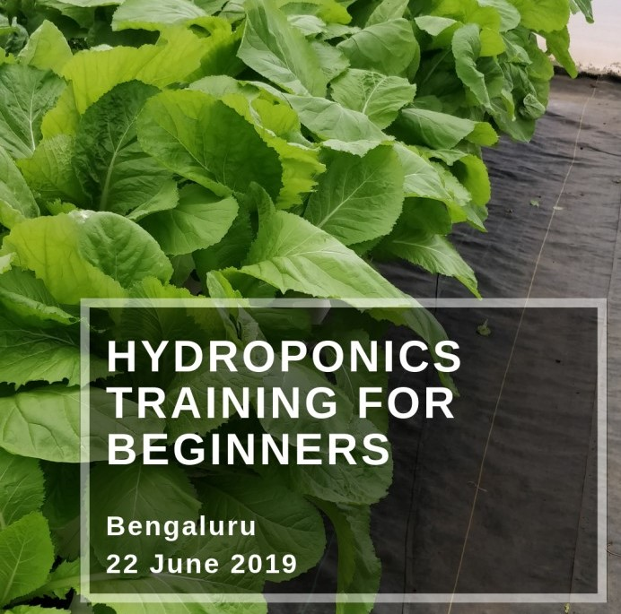 Hydroponics Training In Bangalore, India