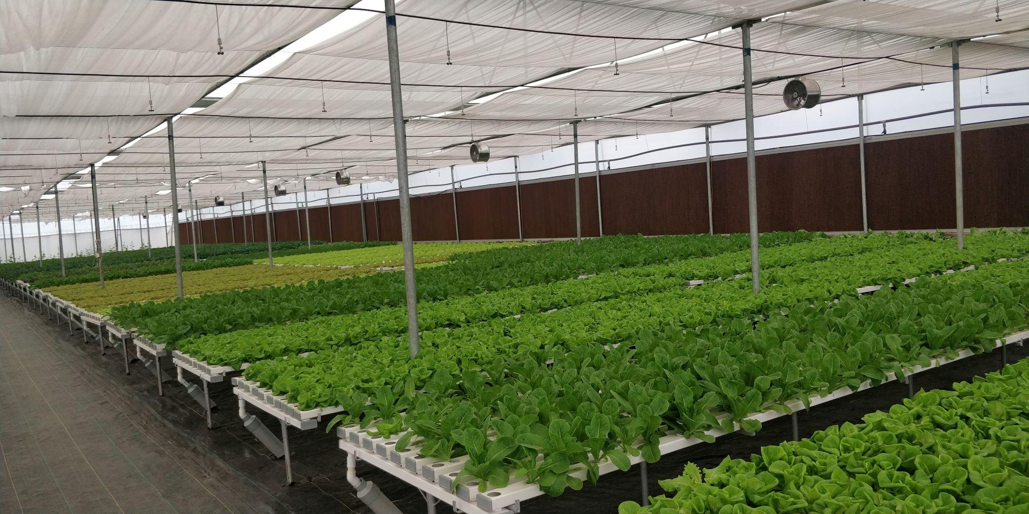 Commercial Hydroponics Farming