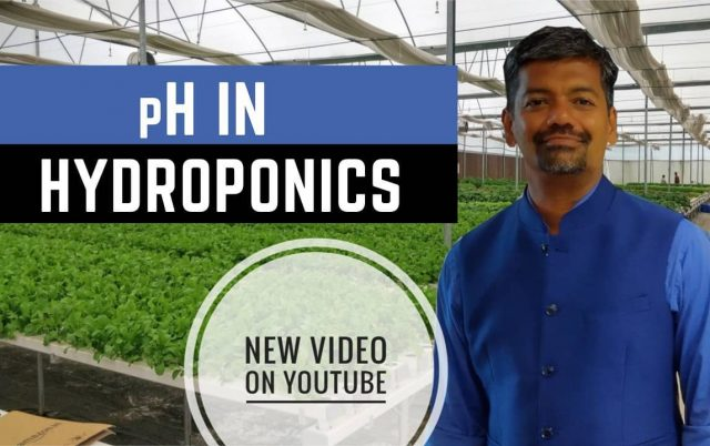 Learn all about pH in Hydroponics  Hydroponics is all about precision and management of EC and pH play a vital role in success of the farm.  I am starting a multi part series of videos on various aspects of Hydroponics.  Link for the video is in bio   . . . . . .  #growyourownfood #farmfresh #farmtofork  #harvest #hydroponics  #instafarm #urbanfarmer  #urbanfarm  #gardenguru #hydroponicscourse #hydroponicworkshop  #tutorial #hydroponics101 #learnhydroponics #phmanagement #agritech #agtech #horticulture #hydroponicsystem #greenhousegrown #plantaseedday #foodsecurity #iamamodernfarmer #modernfarming #growers #urbanagriculture #growingfood #realfood #cleaneating #plantbased  https://youtu.be/oGcdEaFPy_E