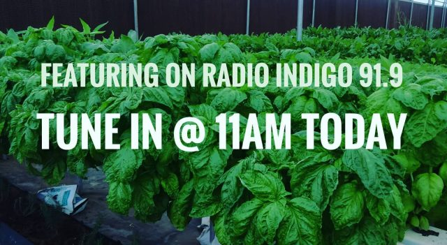 On Air  Happy to share that I will be featured on radio Indigo 91.9 fm  today at 11am .  Tune in for a short gardening chat. @melbinjoemathew @indigomusicdotcom   . . . . . . . #radiointerview  #growyourownfood #farmfresh #farmtofork  #harvest #hydroponics  #instafarm #urbanfarmer #soilless #urbanfarm  #gardenguru #chef #cooking  #agritech #agtech #horticulture #hydroponicsystem #greenhousegrown #plantaseedday #foodsecurity #iamamodernfarmer #modernfarming #growers #urbanagriculture #growingfood #realfood