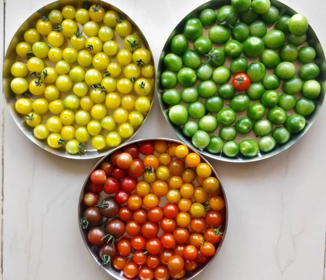 Happy holi  Colors from the farm  We have for 6 colours of cherry tomatoes Red, Orange, yellow, pink, chocolate, strawberry red, and green. Yes green tomato!!  The green one is special as it tastes sweet yet remains green.   . . . . . . . #mondaymotivation #cherrytomatoes #tomatoes #yougrowyourownfood #farmfresh #farmtofork  #harvest #hydroponics  #instafarm #urbanfarmer #soilless #urbanfarm  #gardenguru #chef #cooking #veganfood #healthyeating #agritech #agtech #horticulture #hydroponicsystem #greenhousegrown #plantaseedday #foodsecurity #iamamodernfarmer #modernfarming #growers #urbanagriculture #nammabengaluru