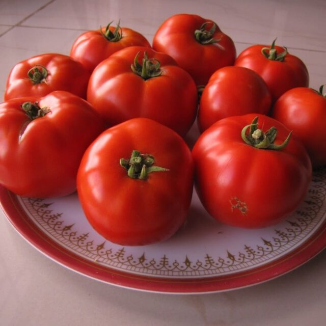 Beefsteak tomatoes   Eversince I tried beefsteak tomatoes, i am hooked.  They are juicy, pulpy and voluminous. It's also a pleasure to watch grow and ripen. Pictured here are one of my very first Beefsteak crop from 2012. Yes 2012.  #tomato #beefsteaktomatoes #vinetomatoes #trusstomatoes #domates #tomate #tomat #greenhousetomatoes  #עגבנייה  #hydroponictomatoes #beeftomato  #hydroponicindia #plantaseedday #foodie #tomatorice #tomatosoup #tomatosauce #tomatosandwich #bengalurufoodie #instabangalore #tracethetaste #redripetomatoes  #indeterminate